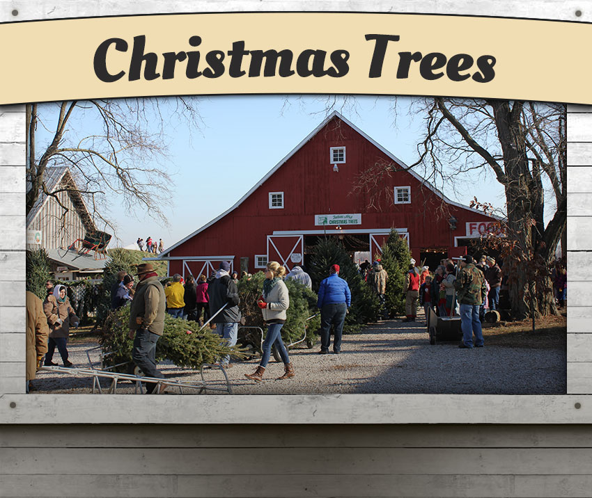 The Real Christmas Tree Farm: Dull's Tree Farm & Pumpkin Patch In Thorntown, Indiana