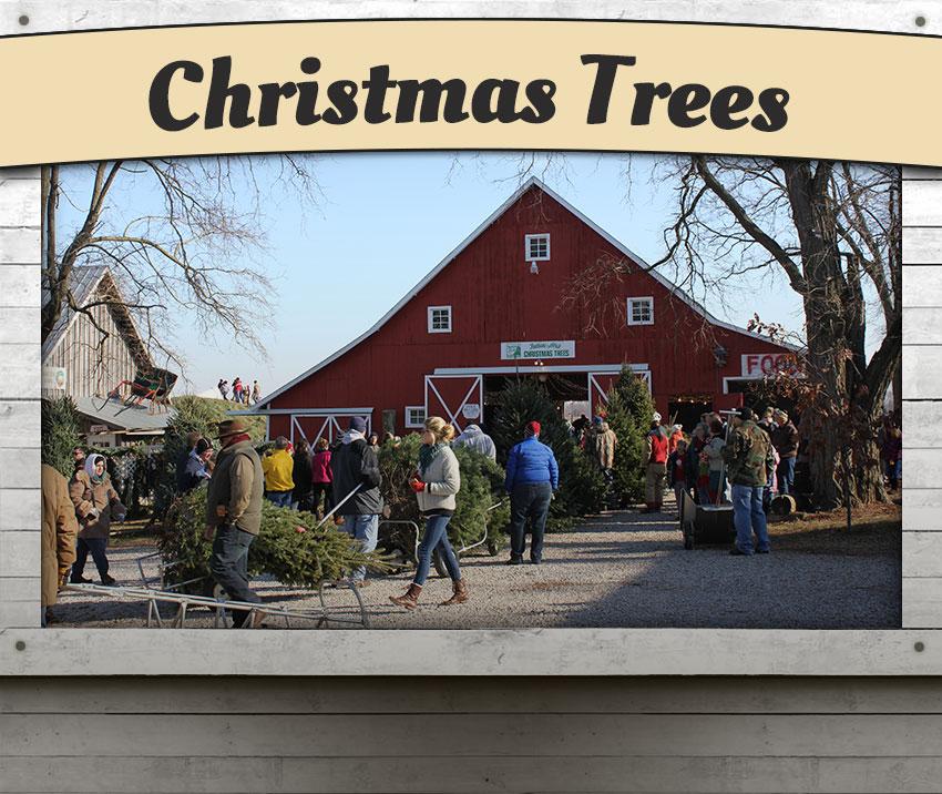 Christmas Tree Farm Southern California: Dull's Tree Farm & Pumpkin Patch In Thorntown, Indiana