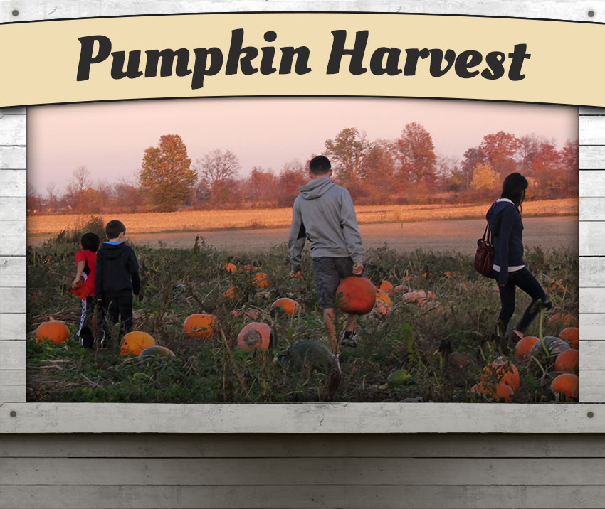 - Dull's Tree Farm & Pumpkin Patch In Thorntown, Indiana