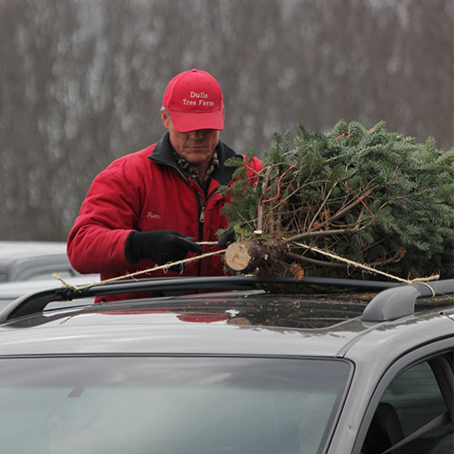 Care for your fresh cut Christmas tree from Dull's Tree Farm in Thorntown, IN near Frankfort and Lebanon with these quick tips.