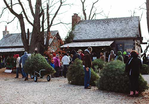 Choose and Cut your own Christmas Tree at Dull's Tree Farm in Thorntown, IN near Frankfort and Lebanon.