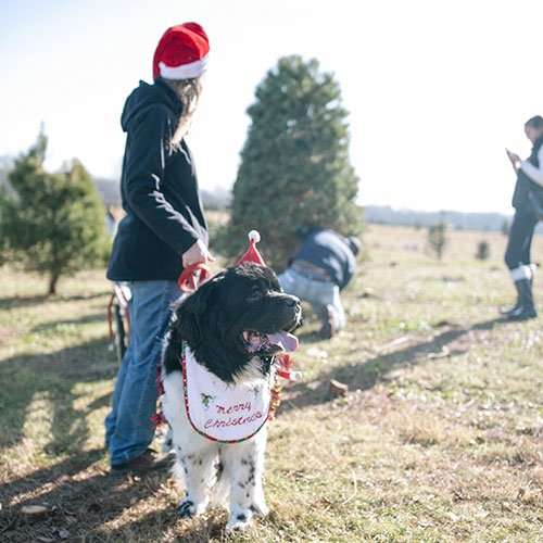 Choose and Cut Christmas Trees at Dull's Tree Farm ...