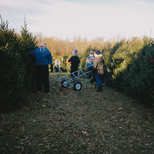 Choose and Cut Christmas Trees at Dull's Tree Farm & Pumpkin Patch in  Thorntown, Indiana - Choose And Cut Christmas Trees At Dull's Tree Farm & Pumpkin Patch