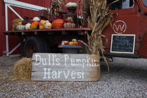 Pick Your Own Pumpkins and Fall festival at Dull's Tree Farm in Thorntown, IN near Frankfort and Lebanon
