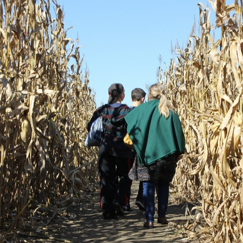 Corn Maze and Fall festival at Dull's Tree Farm in Thorntown, IN near Frankfort and Lebanon